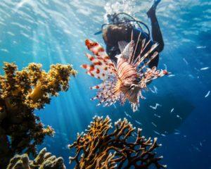Kalambuyan Reef - Coron Bay